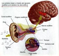 El cerebro de los ancianos activa más ciertas regiones para oír mejor en ambientes ruidosos