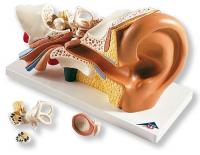 Audífonos y corrección de los trastornos del equilibrio
