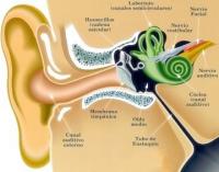 ¿Cuáles son las causas y el tratamiento de la pérdida de audición?